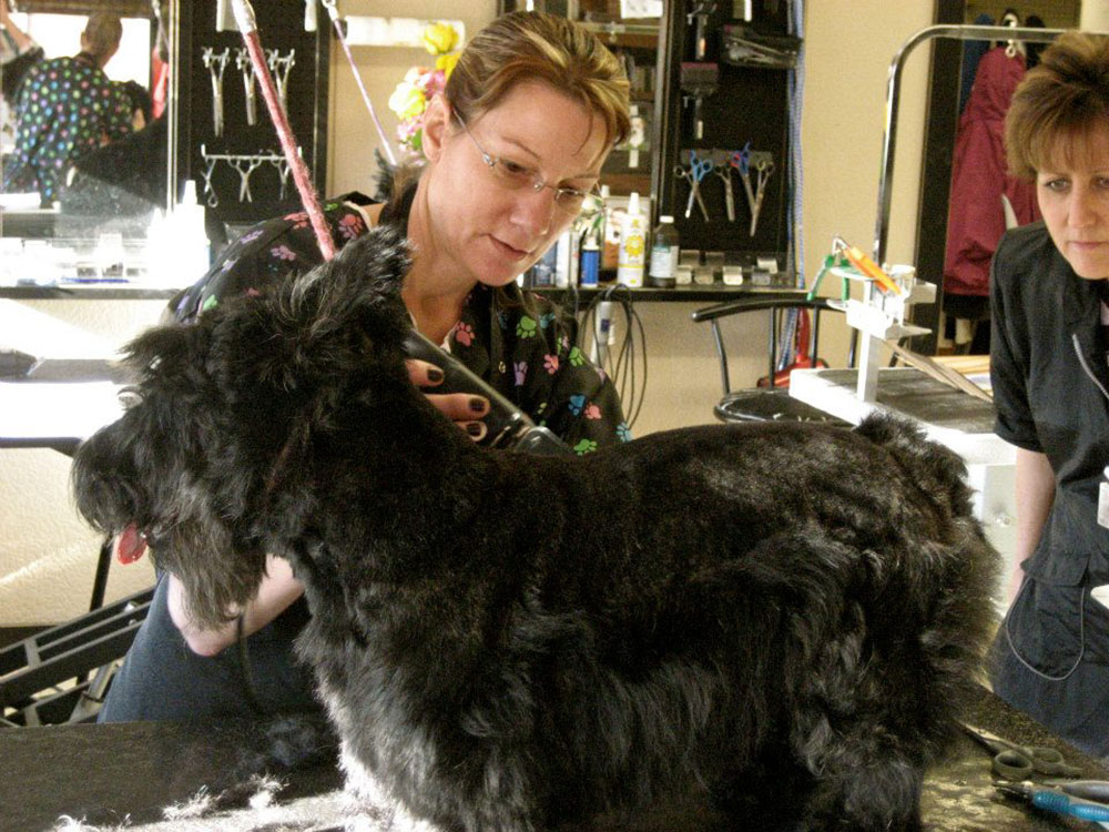 Marinette waggin 39 tails pet grooming salon in marinette wi for A wagging tail pet salon