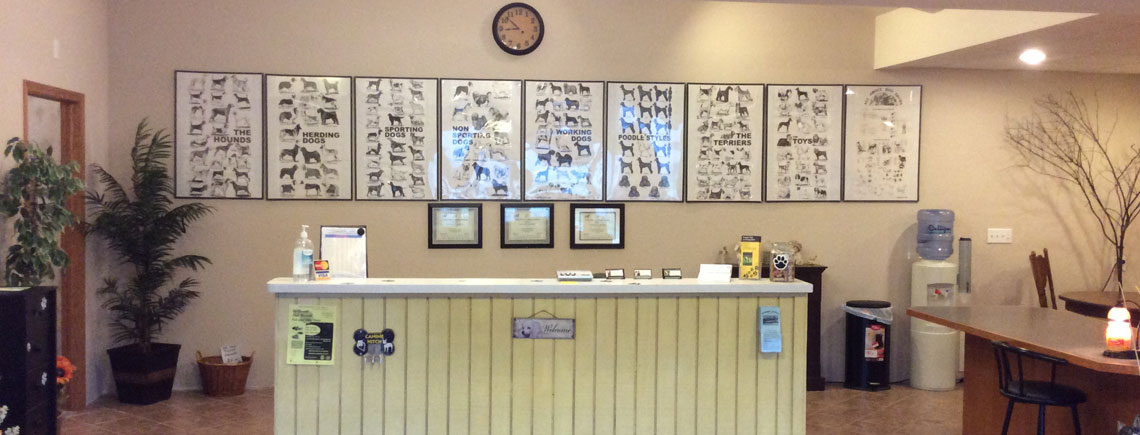 Gallery for A wagging tail pet salon